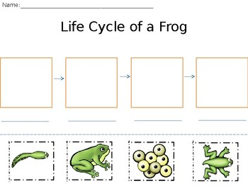 Life Cycle of a Frog Cut, Paste, and Label