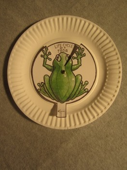 Life Cycle of a Frog. Paper Plate Fun Craft  Art