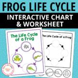 Frog Life Cycle Interactive Chart and Worksheet