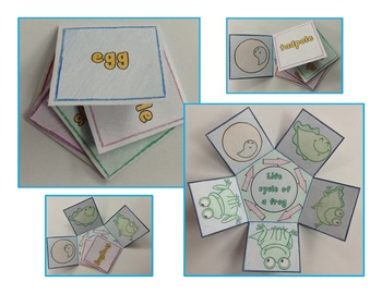 Life Cycle of a Frog Craft - Interactive Crafts - Science Crafts Series