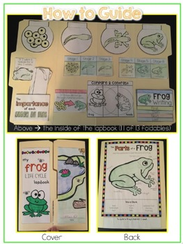 Life Cycle of a Frog Lapbook {with 13 foldables} Frog Life Cycle INB