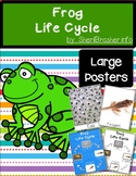 Life Cycle of a Frog | Lg Posters | English