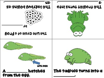 Life Cycle of a Frog Mini Books - ESL/ENL, Special Needs, Young Learners