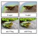 Life Cycle of a Frog--Montessori 3-part cards