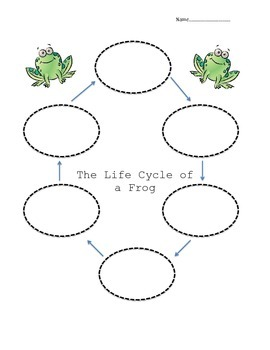 Life Cycle of a Frog Organizer