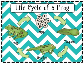 Life Cycle of a Frog Packet