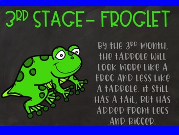 Life Cycle of a Frog Power Point