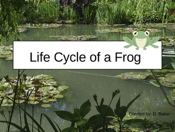 Life Cycle of a Frog Power Point Presentation
