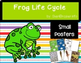 Life Cycle of a Frog | Sm Posters | English