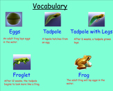 Life Cycle of a Frog - Smartboard