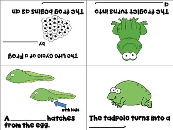 Life Cycle of a Frog Vocabulary Cards and Mini Books BUNDLE
