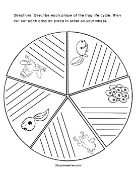 Life Cycle of a Frog Wheel