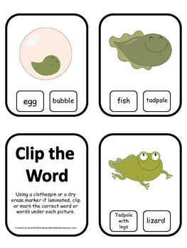 Life Cycle of a Frog Word Clip it Cards preschool biology printable learning gam