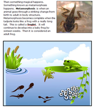 Life Cycle of a Frog Workbook