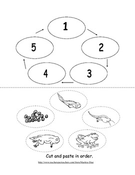 Life Cycle of a Frog-book activity
