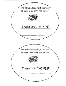 Life Cycle of a Frog booklet