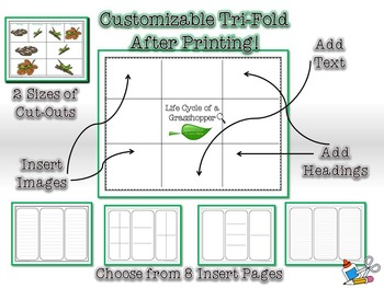 Life Cycle of a Grasshopper Research Tri-Folds an Graphic Organizers