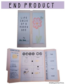 Life Cycle of a Honey Bee Lapbook ::FREEBIE::
