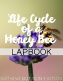 Life Cycle of a Honey Bee Lapbook ::FREEBIE::