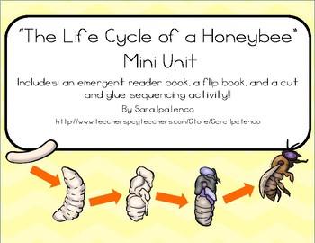 Life Cycle of a Honeybee Mini Unit