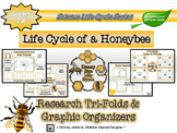 Life Cycle of a Honeybee Research Tri-Folds and Graphic Organizers
