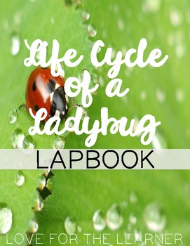 Life Cycle of a Lady Bug Lapbook