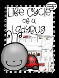 Life Cycle of a Lady Bug informational Pack!