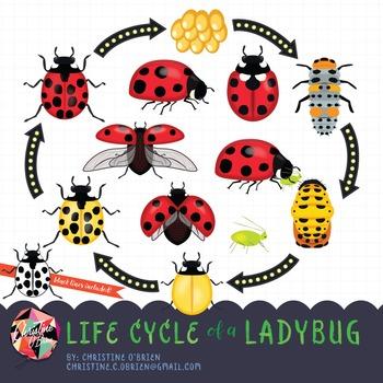 Life Cycle of a Ladybug Clip Art Set