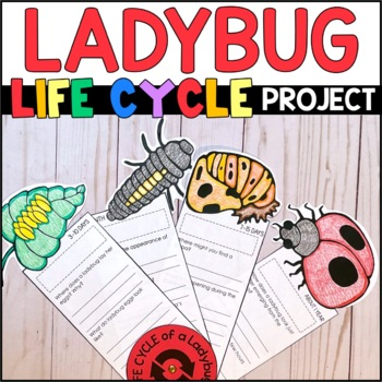 Life Cycle of a Ladybug: Fact Fan