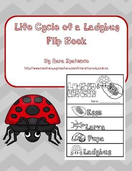 Life Cycle of a Ladybug Flip Book