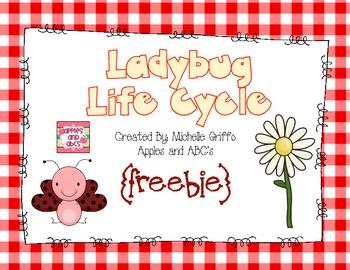 Life Cycle of a Ladybug: {Freebie}