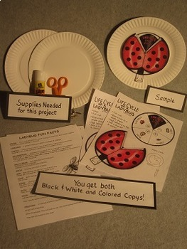 Life Cycle of a Ladybug. Paper Plate Craft Art