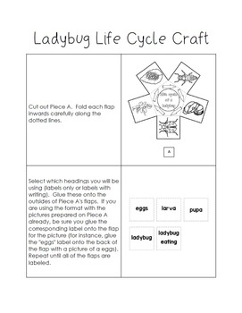 Life Cycle of a Ladybug Craft - Interactive Crafts - Science Crafts Series