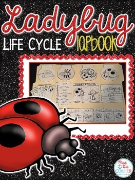 Life Cycle of a Ladybug Lapbook {with 10 foldables} Ladybug Life Cycle INB