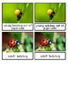 Life Cycle of a Ladybug Montessori 3-part cards