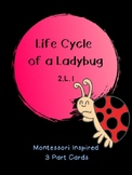 Life Cycle of a Ladybug: Montessori Inspired 3 Part Cards: 2.L.1