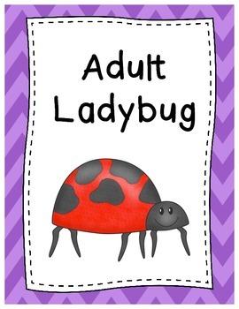 Life Cycle of a Ladybug Posters