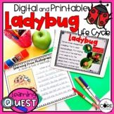 Digital Life Cycle of a Ladybug Activities   Insect   for