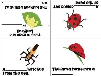Life Cycle of a Ladybug Vocabulary Cards and Mini Books BUNDLE