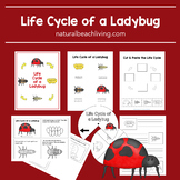 Life Cycle of a Ladybug Worksheets and Activities
