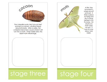 Life Cycle of a Luna Moth; Montessori matching activity for models