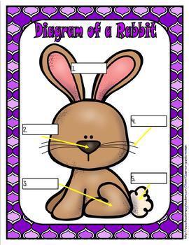 Life Cycle of a Mammal (Rabbit) Bundle