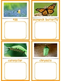 Life Cycle of a Monarch Butterfly--Montessori 3-part cards and matching activity