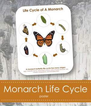 "Life Cycle of a Monarch Butterfly; Montessori 8x10"" Poster for Display"