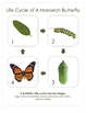 """Life Cycle of a Monarch Butterfly; Montessori 8x10"""" Poster for Display"""