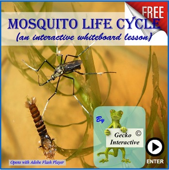 Life Cycle of a Mosquito - a SmartBoard and Interactive Wh