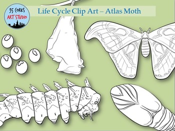 Life Cycle of a Moth BW Clip Art