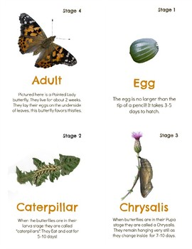 Life Cycle of a Painted Lady Butterfly Set
