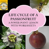 Life Cycle of a Passionfruit (Life Cycle of a Plant)