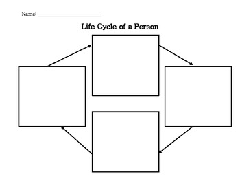 Life Cycle of a Person